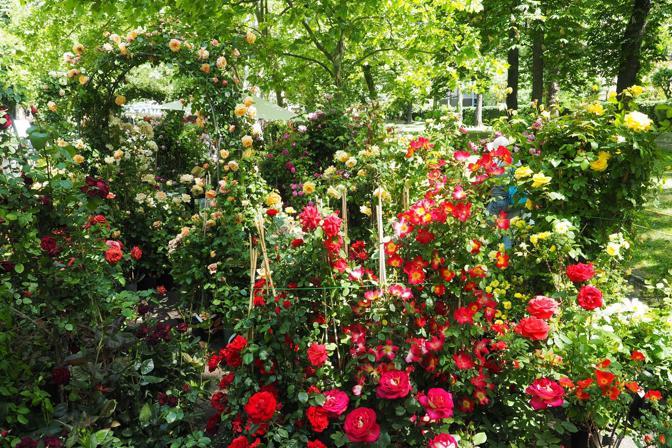 Fiori e profumi ai giardini margherita corrieredibologna - Giardini e fiori ...