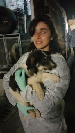 Sono arrivati nella notte tra venerdì e sabato i cani dalle zone del terremoto. Possono essere adottati