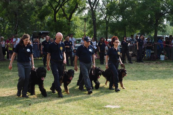 L'esibizione dei con cani delle squadre cinofile dell'Unione Nazionale Arma dei Carabinieri (U.N.A.C.) al centro sportivo Barca, durante «Reno in festa... della Repubblica» per il 2 Giugno.