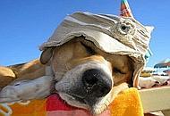 Un cappello contro i colpi di sole