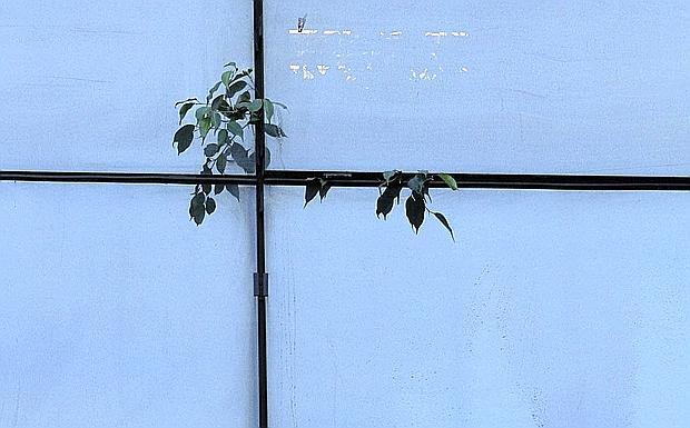 Corriere di bologna foto del giorno for Una storia a pianta aperta