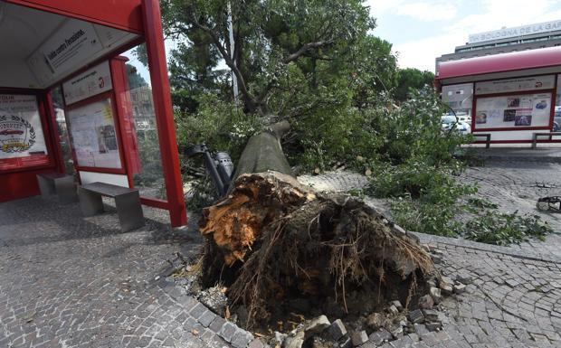Il maltempo di Ferragosto - Il nubifragio che si è abbattuto su Bologna a Ferragosto ha provocato diversi danni e disagi in città. Un albero è crollato in piazza XX Settembre, davanti all'Autostazione, rischiando di colpire chi si trovava alla fermata