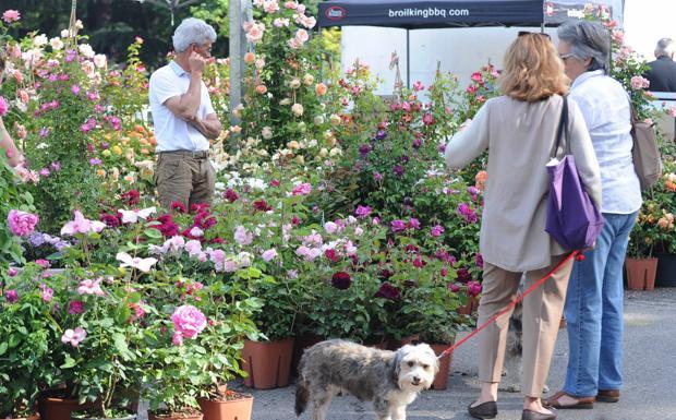 Torna «Giardini e terrazze» - Torna a Bologna dal venerdì a domenica «Giardini e terrazzi». Ai Giardini Margherita sono attesi oltre 200 espositori tra produttori di piante e fiori, arredi e attrezzature per il giardinaggio, abbigliamento, artigianato artistico e prodotti dei territori. Grazie al percorso «Verde Creativo» che prevede la progettazione di spazi verdi da parte di professionisti del settore, i visitatori potranno prendere spunto e verificare le tendenze in atto nella progettazione degli spazi `open air´. Tra le novità dell'edizione 2016 la sezione `Dog Party e Parade´, dove protagonisti saranno gli amici a quattro zampe. L'iniziativa, promossa dal Comune di Bologna, quartiere Santo Stefano, sara' caratterizzata da incontri e competizioni riservati alla `cittadinanza´ canina: sfilate, concorsi, dimostrazioni, gruppi 'simpatia' che si terranno ai Giardini Margherita e ai Giardini del Baraccano.