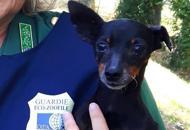 Abbandonato per giorni al sole Guardie zoofile salvano il cane Zeus