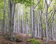 Marroni, legna e funghi: quanto vale l'economia del bosco
