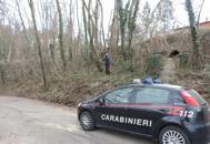 Taglia il tronco di un alberoe resta schiacciato: è grave